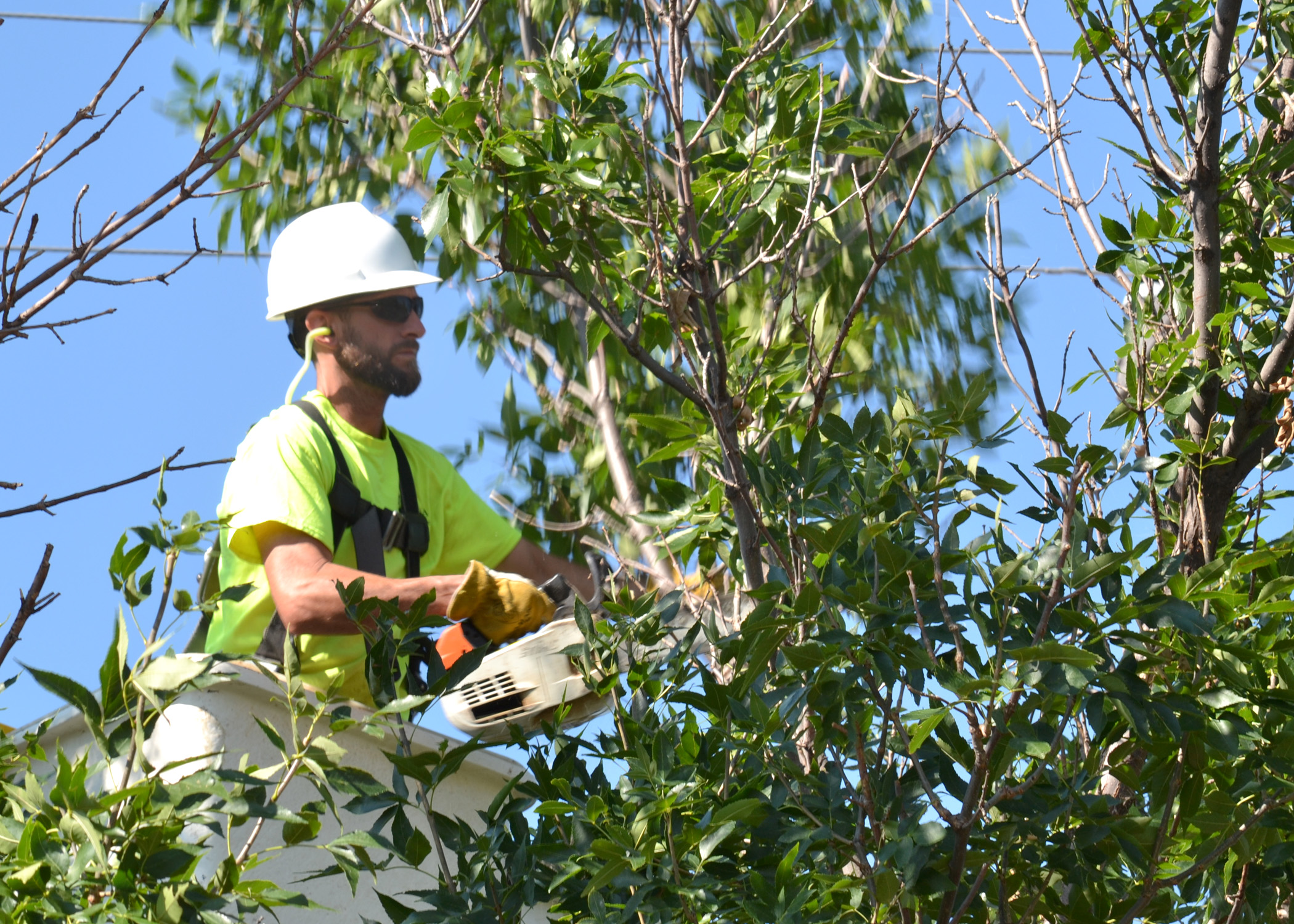 A tree trimmer in a bucket lift trims branches away from power lines in Hays, Kansas.